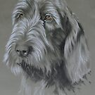 Spinone Italiano by BarbBarcikKeith