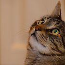 Jimmy Cat, Watchful. by johnrf