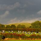 Sunshine and rain, County Kilkenny, Ireland by Andrew Jones