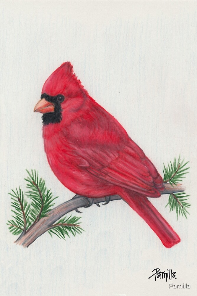 Cardinal by Parnilla