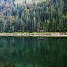 Autumn greenery over the lake by Patrick Morand