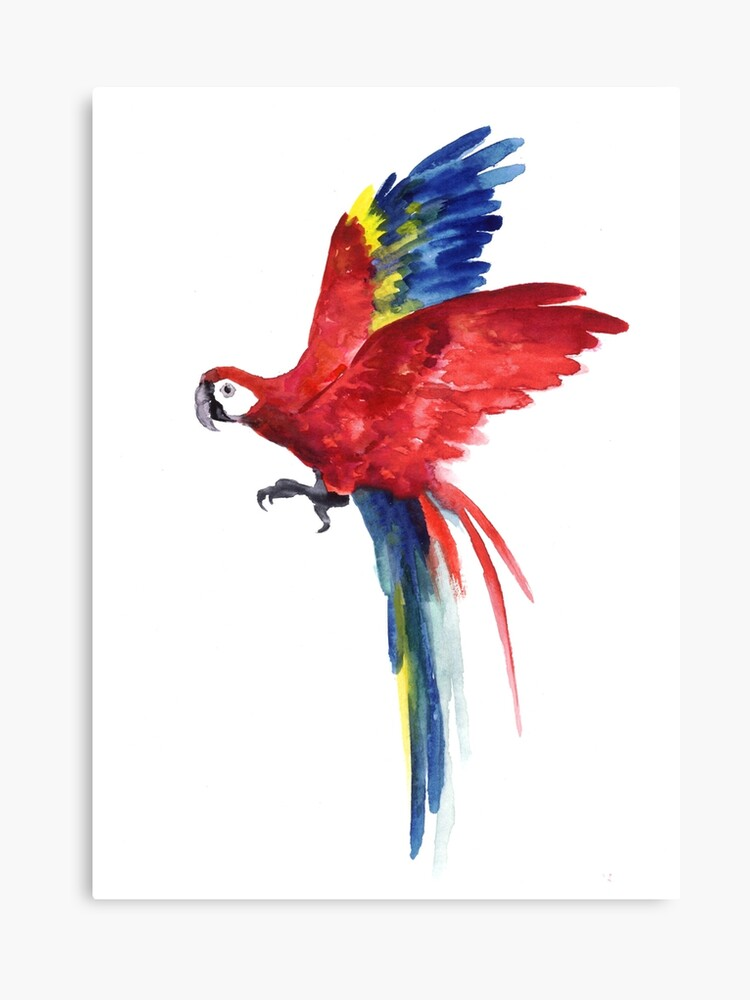 c3d13c579e95e Macaw Red Blue Parrot Watercolor Painting Tropical Bird Canvas Print