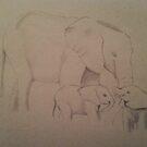Elephant Family by Charlotte Slade
