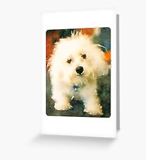 Shaggy Bichon Greeting Card
