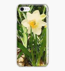 White Garden Daffodil in the Morning Sun iPhone Case/Skin