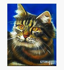 Cathy the cat Photographic Print