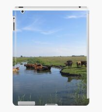 Cows looking for cool water iPad Case/Skin
