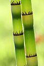 confidences vert tendre by yvesrossetti