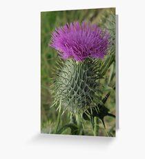 Scotch Thistle Greeting Card