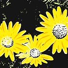 Daisies Lithograph Prints by Mark Malinowski