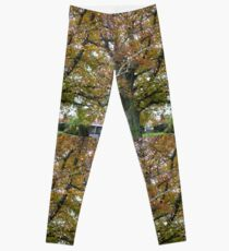 Tree, City Park, Launceston, Tasmania Leggings