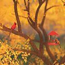 Autumn Guardian by Hannah Joy Patterson