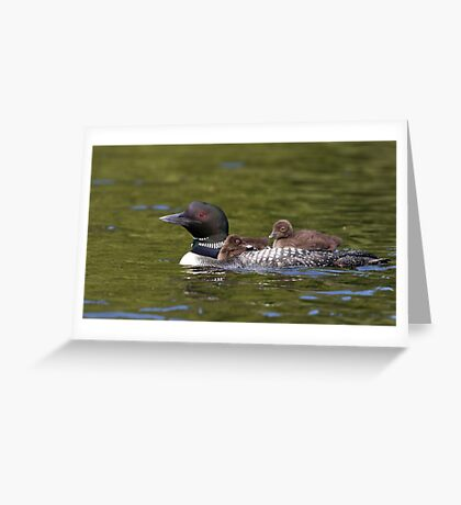 Common loon swimming with two chicks on her back Greeting Card