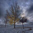 Last Leaves by IanMcGregor