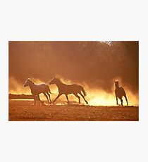 """HORSES IN SILHOUETTE"" at DUSK, RUNNING WILD,RUNNING FREE Photographic Print"