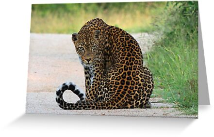 A special leopard ! by Anthony Goldman