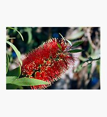 Flower red Photographic Print