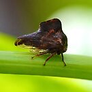 Treehopper by William Brennan