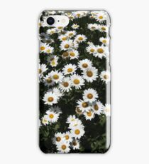 Rest Stop Daisies 1 iPhone Case/Skin