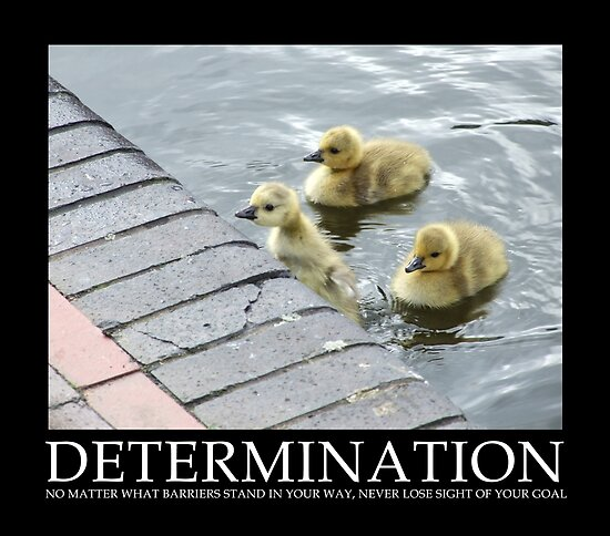 Determination by Mark Wilson