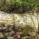 Little River Rapids by Noble Upchurch