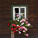 Farmhouse Window by Christine  Wilson