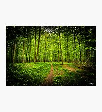 Twilight Woods Photographic Print