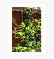 The Magic of Sunshine - Rose and Honeyscukle Leaves Art Print