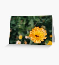 Bee Pollinating Orange Flower Greeting Card