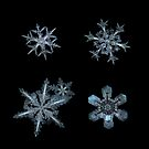 Five snowflakes on black background by Alexey Kljatov