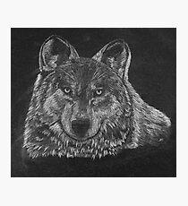 Lone Wolf Scratch Art Photographic Print