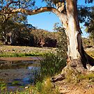 Brachina Gorge, Study #3, Wilpena, South Australia. by johnrf