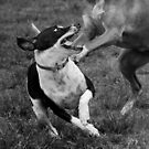 Dogs with game face on .12 by Alex Preiss