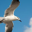Gull's Eye View by Donna Wilkins