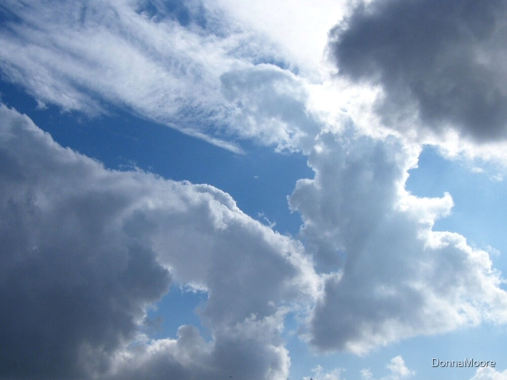 Fluffy animal clouds.... by DonnaMoore