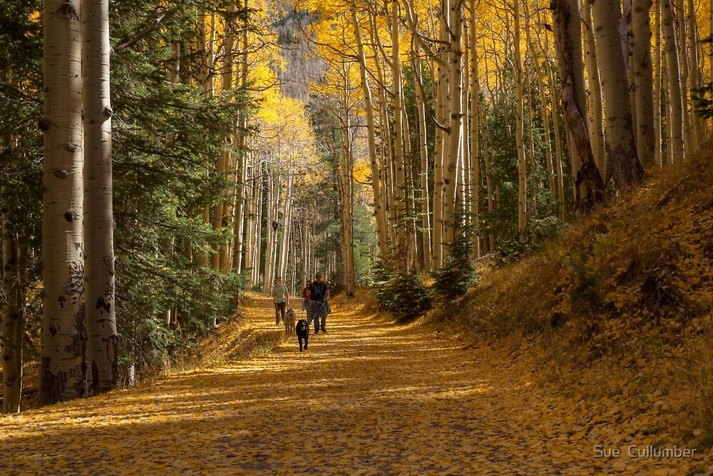 A Walk in the Woods by Sue  Cullumber