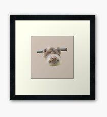 sloth on a vine Framed Print