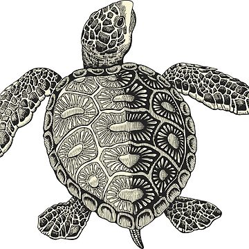 Turtle Vintage Drawing by cartoon