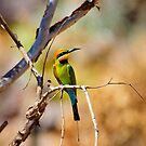 Rainbow Bee-eater by Dilshara Hill