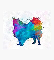 Pomeranian in watercolor Photographic Print
