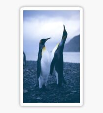 King Penguins Sticker