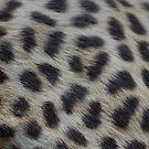 Leopard by lefont