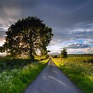 A May evening , Worcestershire, England. by Angie Latham