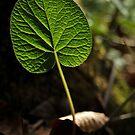 Leaf by Talida Pacurar