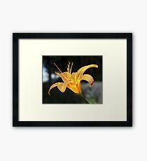 Molten Lilly Framed Print