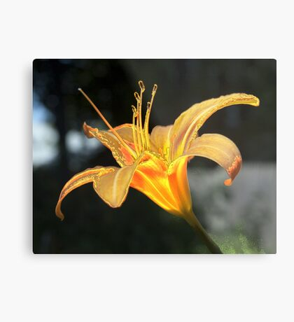 Molten Lilly Metal Print