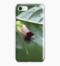 Deadly nightshade (Atropa belladonna) iPhone Case/Skin