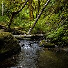 A Good Place To Stop  ~ Upper Whittaker Creek ~ by Charles & Patricia   Harkins ~ Picture Oregon