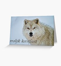 Arctic Wolf Christmas Card - Dutch - 15 Greeting Card