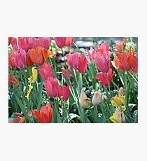 A Patch of Spring Photographic Print